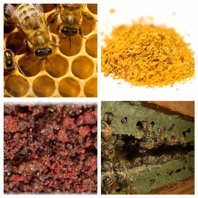 The Many Colors of Propolis: The Tiny World of Bees