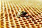 cleaning-bee