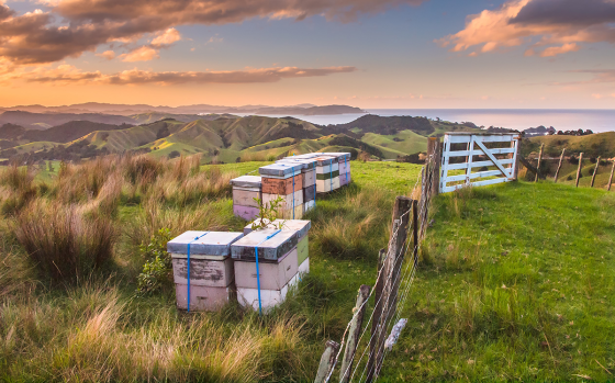 New Zealand Bee Hives