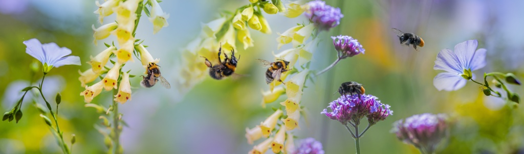 Saving the Bees, how you can help our buzzy little friends.